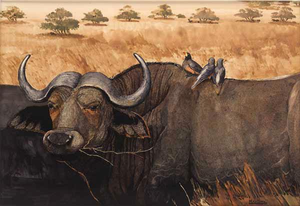 Water buffalo army - photo#20